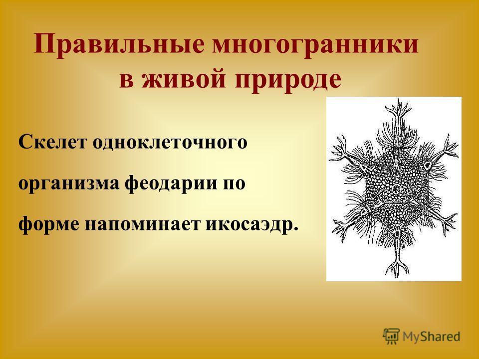 Правильные многогранники в живой природе Скелет одноклеточного организма феодарии по форме напоминает икосаэдр.