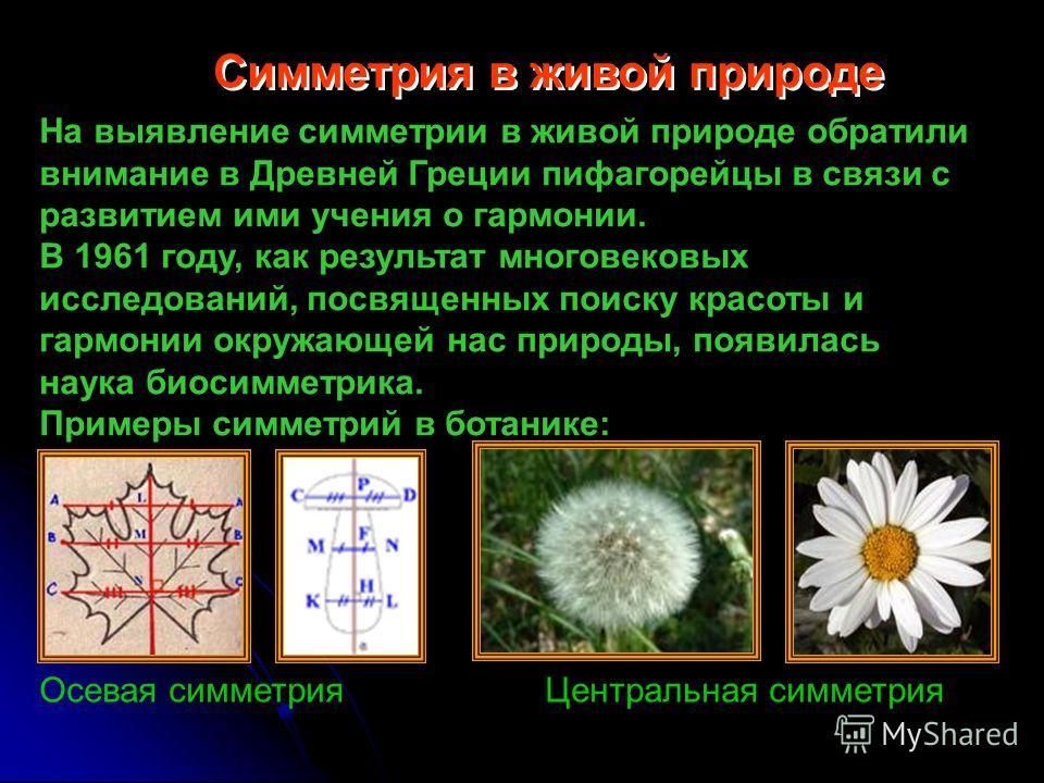 Симметрия в живой природе На выявление симметрии в живой природе обратили внимание в Древней Греции пифагорейцы в связи с развитием ими учения о гармонии. В 1961 году, как результат многовековых исследований, посвященных поиску красоты и гармонии окр