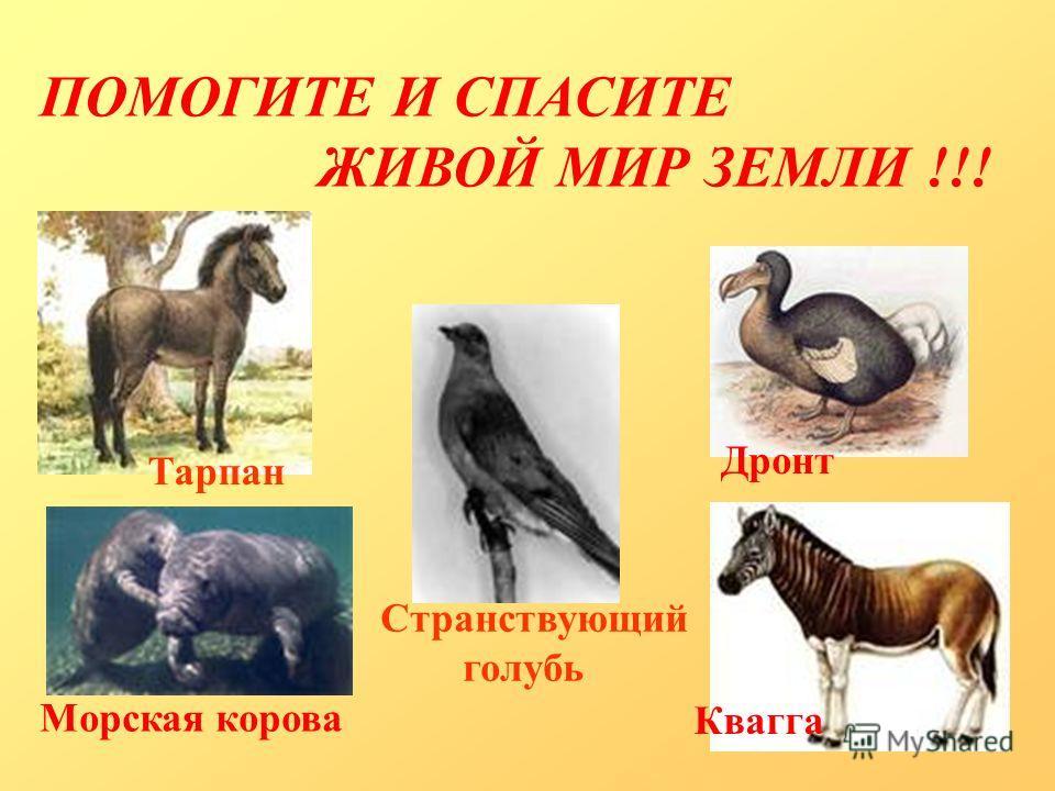 ПОМОГИТЕ И СПАСИТЕ ЖИВОЙ МИР ЗЕМЛИ !!! Тарпан Дронт Квагга Морская корова Странствующий голубь