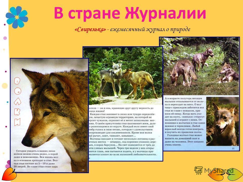«Свирелька» - ежемесячный журнал о природе В стране Журналии