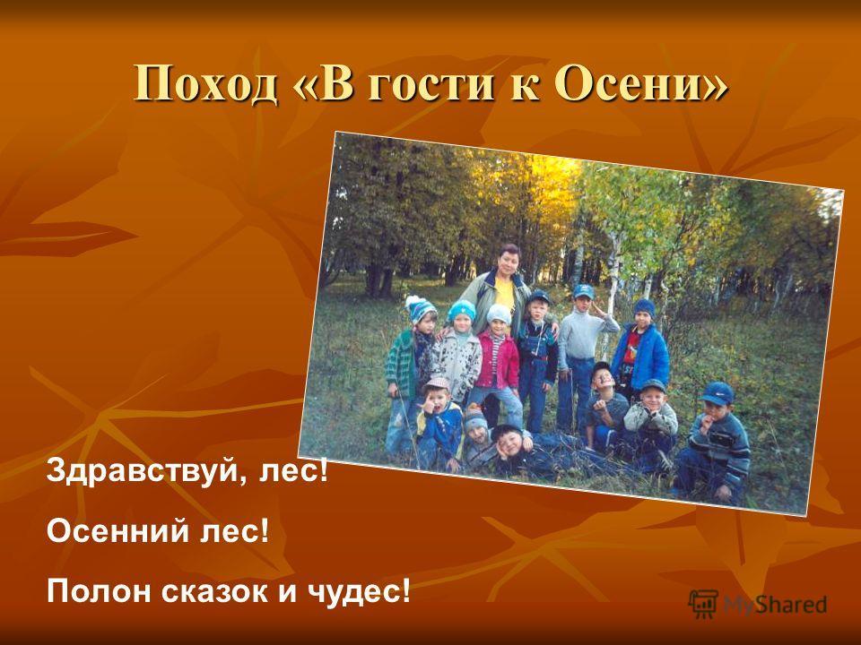 Здравствуй, лес! Осенний лес! Полон сказок и чудес! Поход «В гости к Осени»