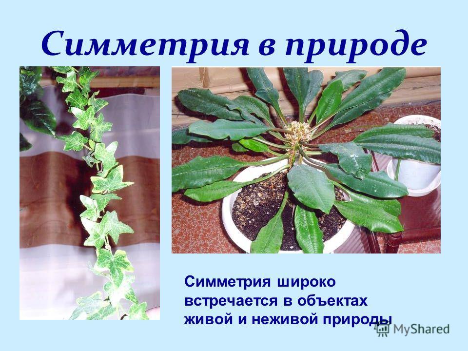 Симметрия в природе Симметрия широко встречается в объектах живой и неживой природы