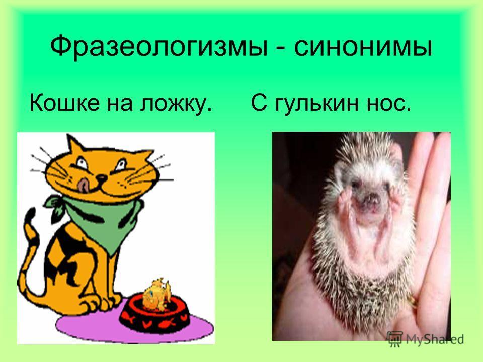 Фразеологизмы - синонимы Кошке на ложку.С гулькин нос.