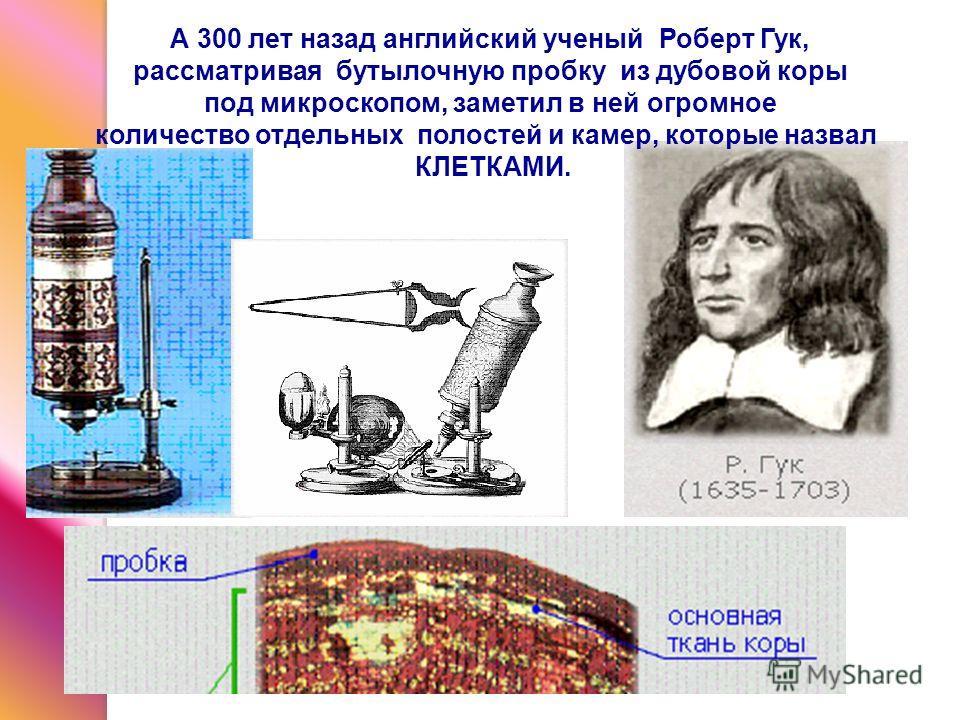 А 300 лет назад английский ученый Роберт Гук, рассматривая бутылочную пробку из дубовой коры под микроскопом, заметил в ней огромное количество отдельных полостей и камер, которые назвал КЛЕТКАМИ.