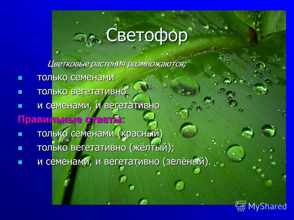 Светофор Цветковые растения размножаются; только семенами только семенами только вегетативно только вегетативно и семенами, и вегетативно и семенами, и вегетативно Правильные ответы: только семенами (красный) только семенами (красный) только вегетати