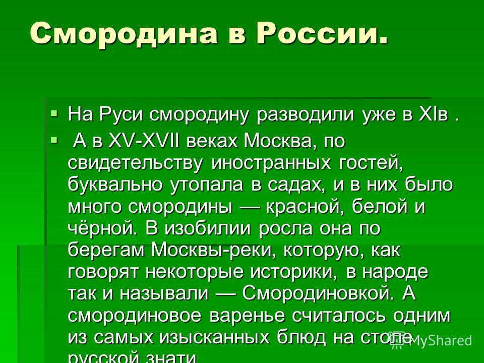 Смородина в России. На Руси смородину разводили уже в XIв. На Руси смородину разводили уже в XIв. А в XV-XVII веках Москва, по свидетельству иностранных гостей, буквально утопала в садах, и в них было много смородины красной, белой и чёрной. В изобил
