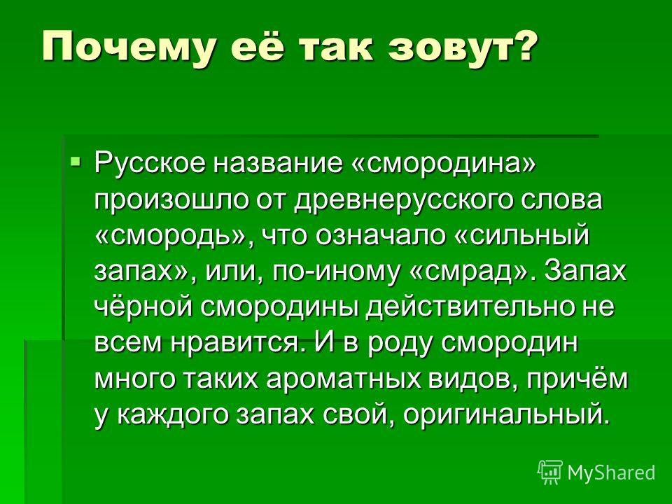 Почему её так зовут? Русское название «смородина» произошло от древнерусского слова «смородь», что означало «сильный запах», или, по-иному «смрад». Запах чёрной смородины действительно не всем нравится. И в роду смородин много таких ароматных видов,