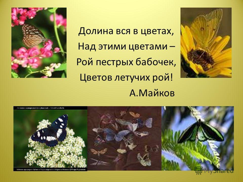 Долина вся в цветах, Над этими цветами – Рой пестрых бабочек, Цветов летучих рой! А.Майков