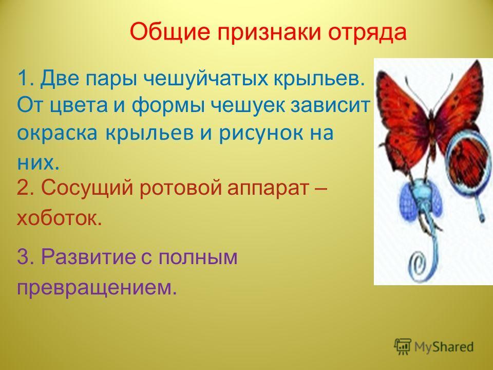 Общие признаки отряда 1. Две пары чешуйчатых крыльев. От цвета и формы чешуек зависит окраска крыльев и рисунок на них. 2. Сосущий ротовой аппарат – хоботок. 3. Развитие с полным превращением.