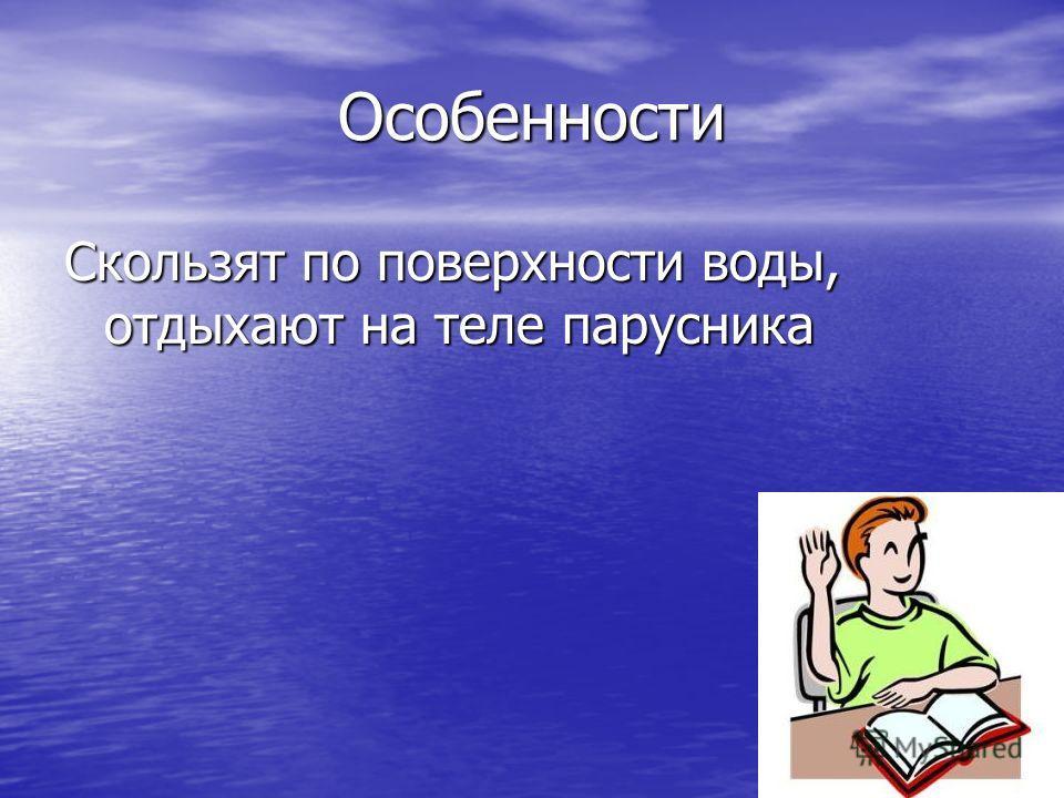 Особенности Скользят по поверхности воды, отдыхают на теле парусника