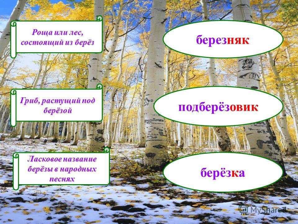 Роща или лес, состоящий из берёз Ласковое название берёзы в народных песнях Гриб, растущий под берёзой березняк подберёзовик берёзка