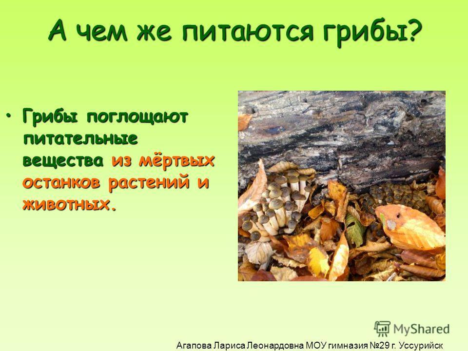 ИНТЕРЕСНЫЙ ФАКТ! Шляпка и ножка – это ПЛОДОВОЕ ТЕЛО гриба. Сам гриб скрыт под землёй. ГРИБНИЦА и есть сам гриб!