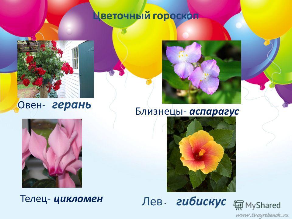 Цветочный гороскоп Овен- герань Лев - гибискус Телец- цикломен Близнецы- аспарагус