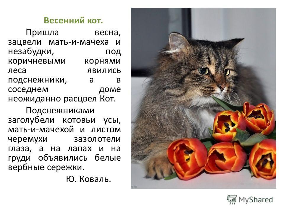 Сочинения на тему коты