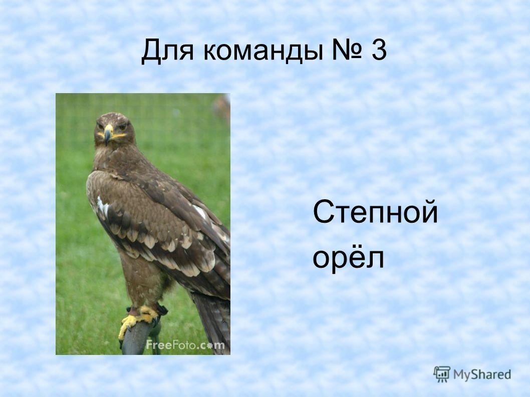 Для команды 3 Степной орёл