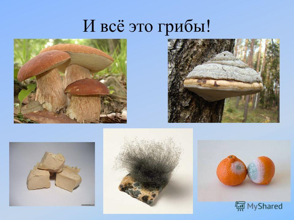 И всё это грибы!