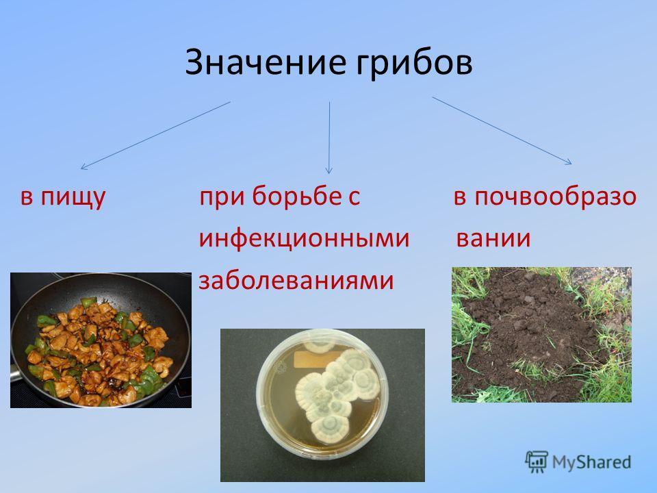 Значение грибов в пищу при борьбе с в почвообразо инфекционными вании заболеваниями