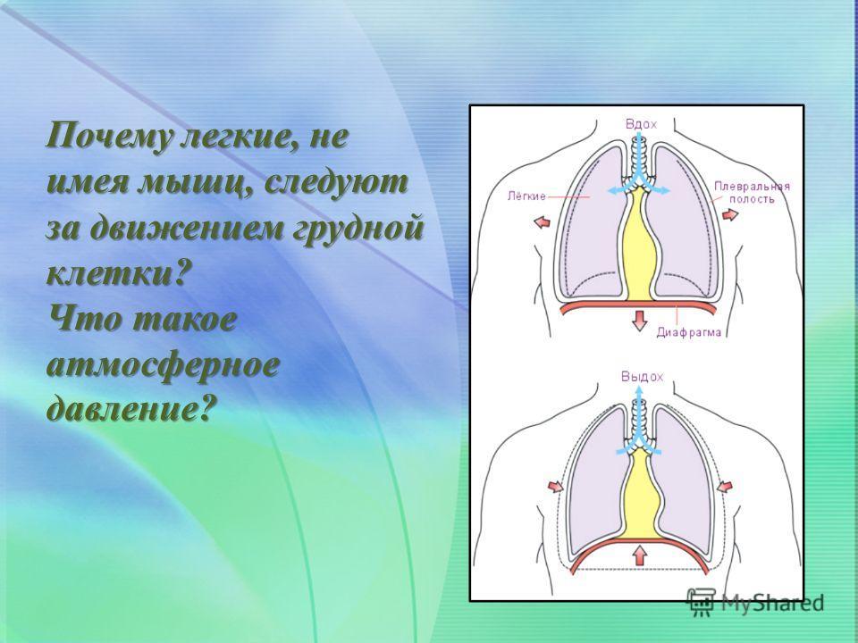 Почему легкие, не имея мышц, следуют за движением грудной клетки? Что такое атмосферное давление?