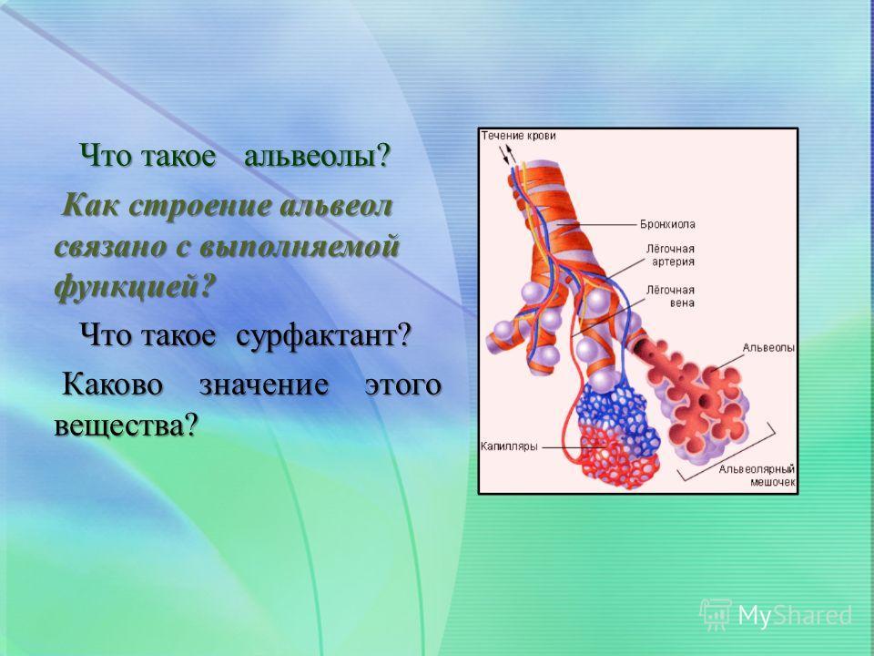 Что такое альвеолы? Что такое альвеолы? Как строение альвеол связано с выполняемой функцией? Как строение альвеол связано с выполняемой функцией? Что такое сурфактант? Что такое сурфактант? Каково значение этого вещества? Каково значение этого вещест
