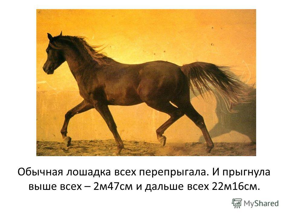 Обычная лошадка всех перепрыгала. И прыгнула выше всех – 2м47см и дальше всех 22м16см.