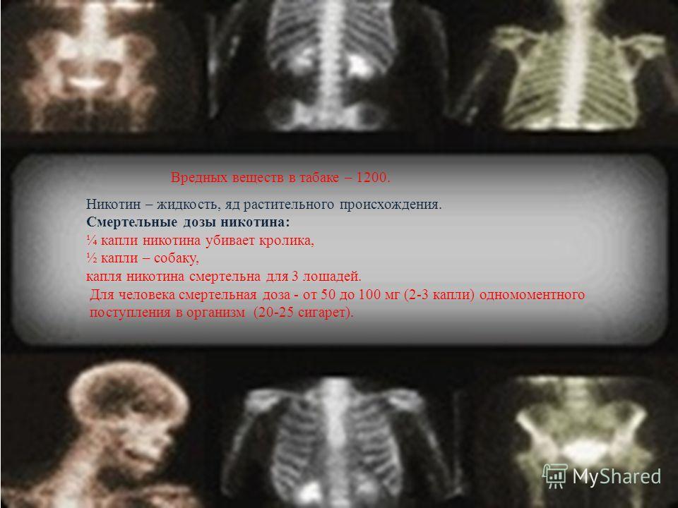 Вредных веществ в табаке – 1200. Никотин – жидкость, яд растительного происхождения. Смертельные дозы никотина: ¼ капли никотина убивает кролика, ½ капли – собаку, капля никотина смертельна для 3 лошадей. Для человека смертельная доза - от 50 до 100