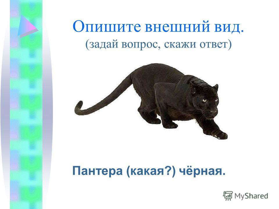 Опишите внешний вид. (задай вопрос, скажи ответ) Пантера (какая?) чёрная.