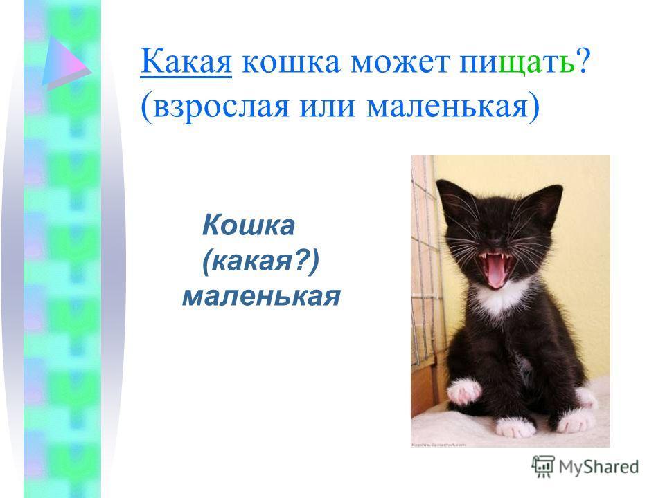 Какая кошка может пищать? (взрослая или маленькая) Кошка (какая?) маленькая