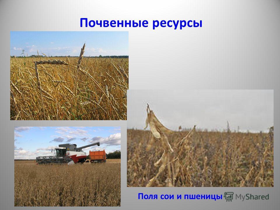 Почвенные ресурсы Поля сои и пшеницы