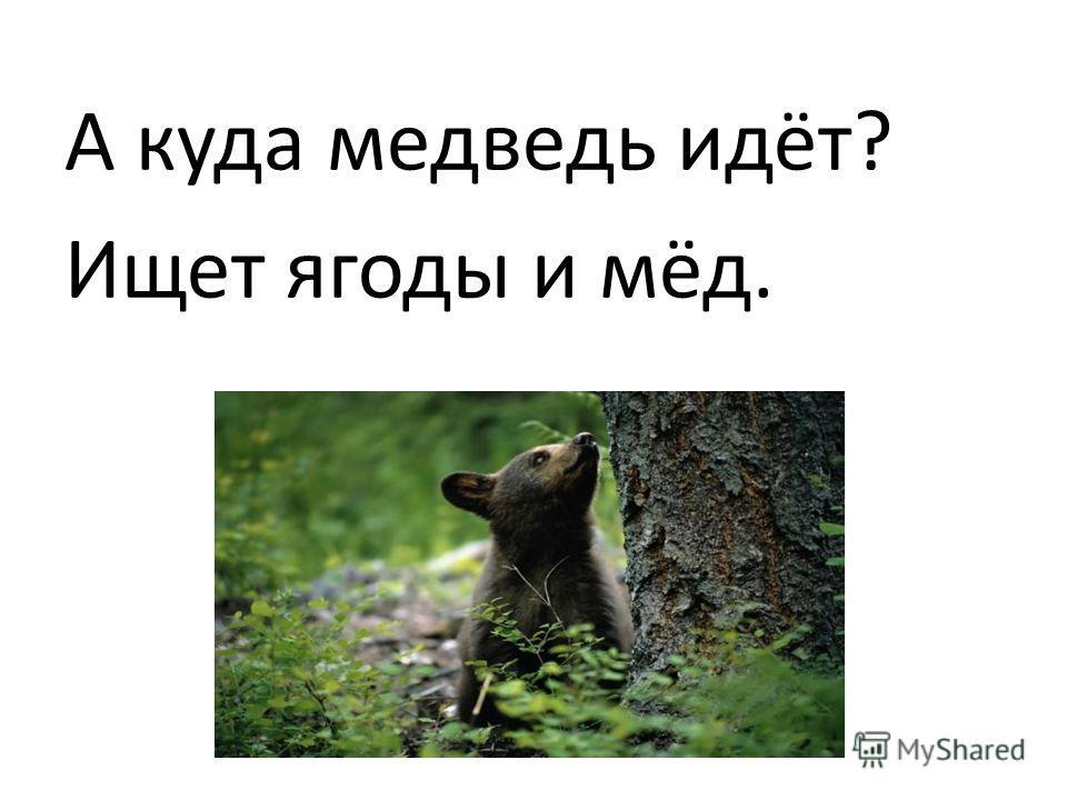 А куда медведь идёт? Ищет ягоды и мёд.