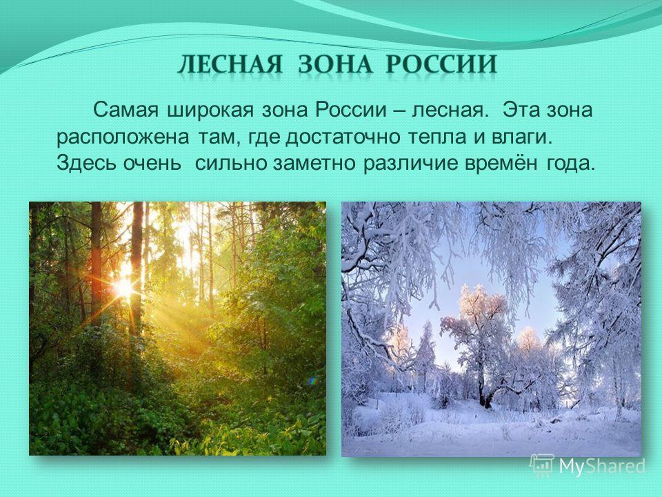 Самая широкая зона России – лесная. Эта зона расположена там, где достаточно тепла и влаги. Здесь очень сильно заметно различие времён года.