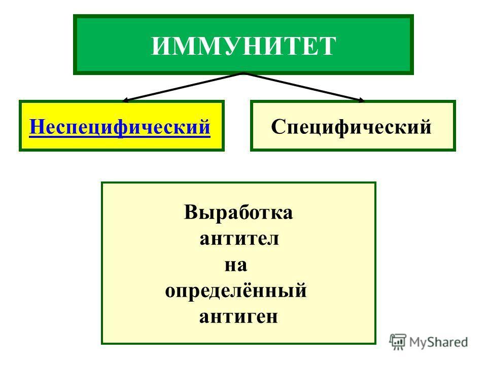 ИММУНИТЕТ НеспецифическийСпецифический Выработка антител на определённый антиген