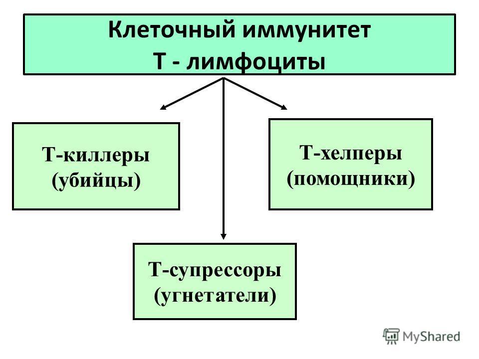 Клеточный иммунитет Т - лимфоциты Т-киллеры (убийцы) Т-хелперы (помощники) Т-супрессоры (угнетатели)
