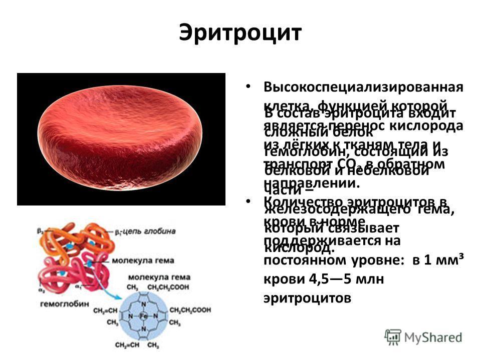 Эритроцит Высокоспециализированная клетка, функцией которой является перенос кислорода из лёгких к тканям тела и транспорт CO 2 в обратном направлении. Количество эритроцитов в крови в норме поддерживается на постоянном уровне: в 1 мм³ крови 4,55 млн
