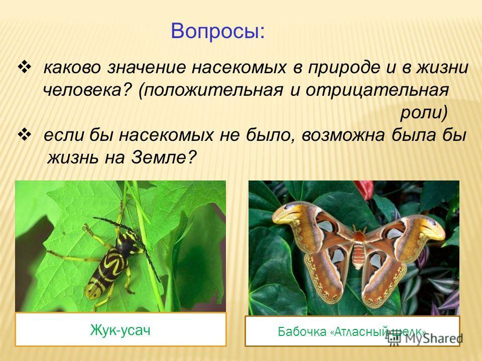 Составьте примету и объясните её. Паук плетет сеть к сухой погоде. Муравьи прячутся в муравейник к ненастью. Много мошек готовь лукошко.