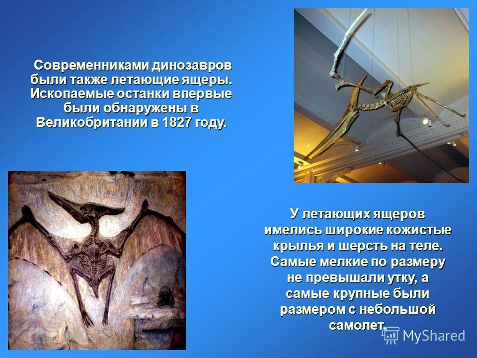 Современниками динозавров были также летающие ящеры. Ископаемые останки впервые были обнаружены в Великобритании в 1827 году. У летающих ящеров имелись широкие кожистые крылья и шерсть на теле. Самые мелкие по размеру не превышали утку, а самые крупн