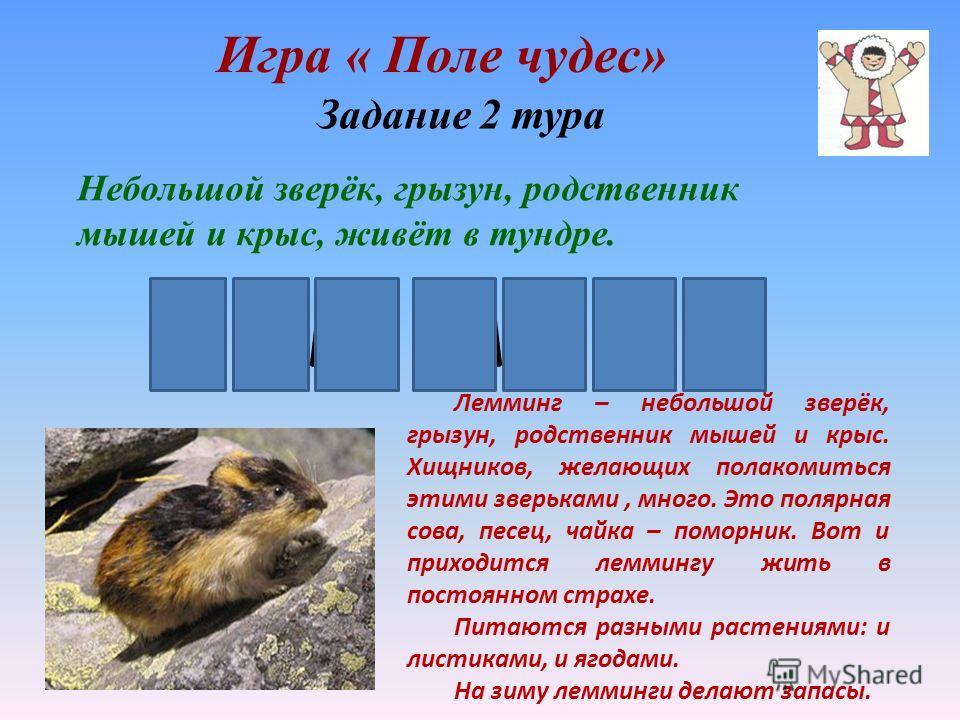 Игра « Поле чудес» лемминг Небольшой зверёк, грызун, родственник мышей и крыс, живёт в тундре. Лемминг – небольшой зверёк, грызун, родственник мышей и крыс. Хищников, желающих полакомиться этими зверьками, много. Это полярная сова, песец, чайка – пом