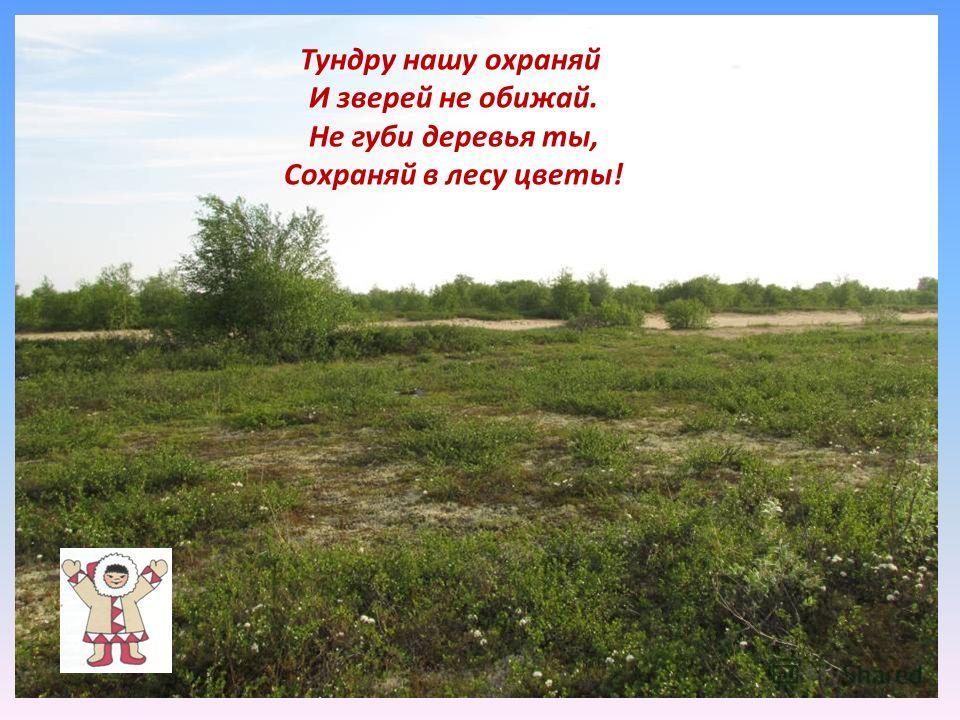 Тундру нашу охраняй И зверей не обижай. Не губи деревья ты, Сохраняй в лесу цветы!