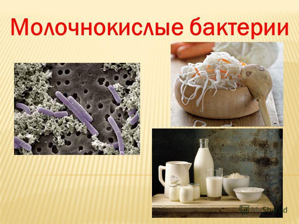 Значение бактерий в природе и жизни