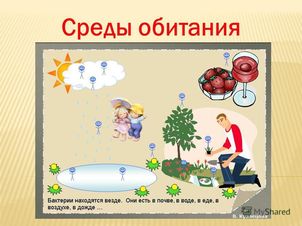 Презентация На Тему Одноклеточные Организмы