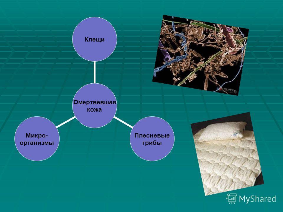 Омертвевшая кожа Клещи Плесневые грибы Микро- организмы