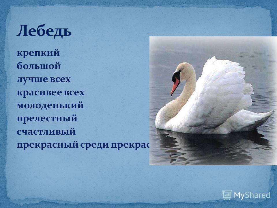 крепкий большой лучше всех красивее всех молоденький прелестный счастливый прекрасный среди прекрасных лебедей