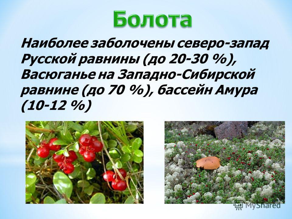 Наиболее заболочены северо-запад Русской равнины (до 20-30 %), Васюганье на Западно-Сибирской равнине (до 70 %), бассейн Амура (10-12 %)