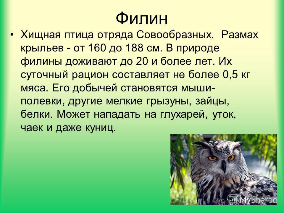 Филин Хищная птица отряда Совообразных. Размах крыльев - от 160 до 188 см. В природе филины доживают до 20 и более лет. Их суточный рацион составляет не более 0,5 кг мяса. Его добычей становятся мыши- полевки, другие мелкие грызуны, зайцы, белки. Мож