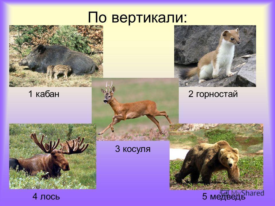По вертикали: 1 кабан2 горностай 3 косуля 4 лось5 медведь