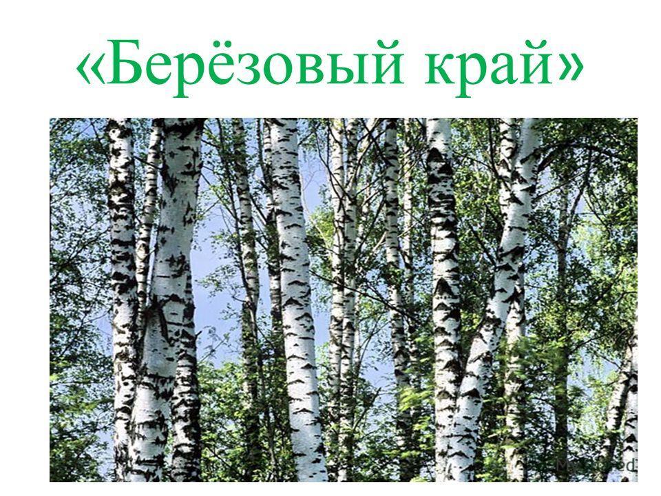 «Берёзовый край »