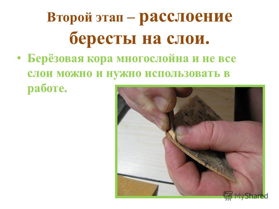 Второй этап – расслоение бересты на слои. Берёзовая кора многослойна и не все слои можно и нужно использовать в работе.