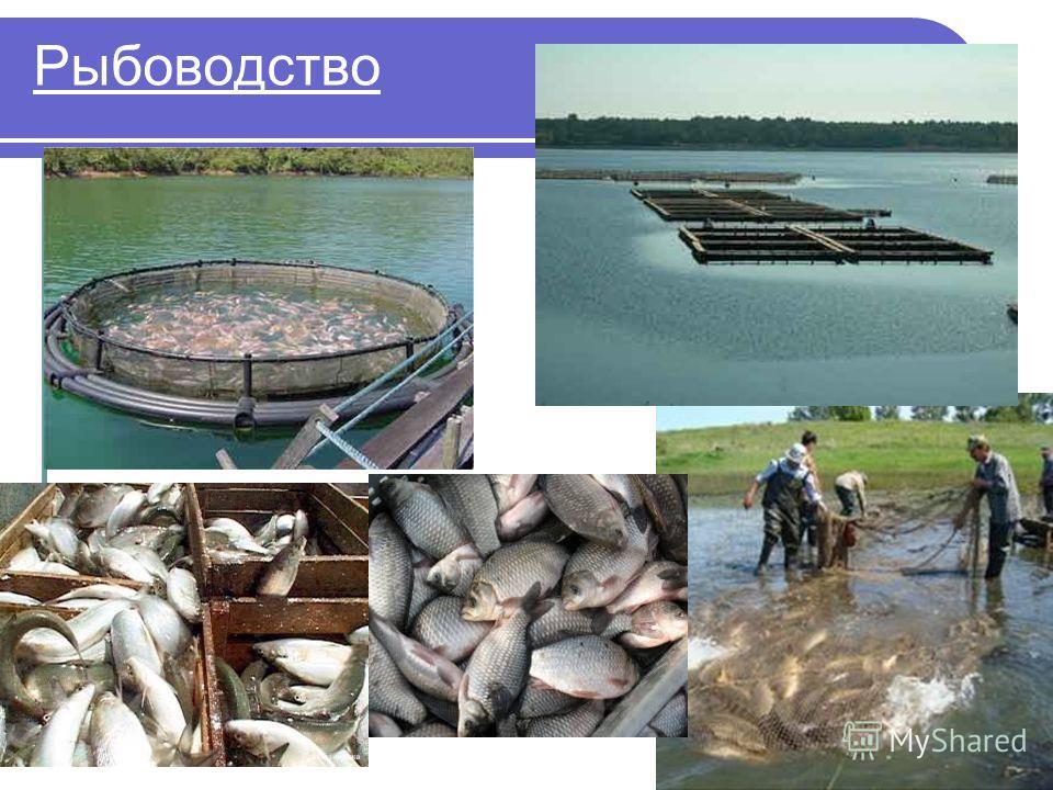 Рыбоводство