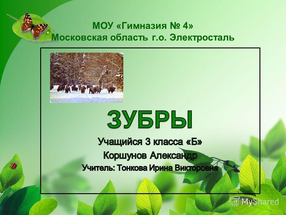МОУ «Гимназия 4» Московская область г.о. Электросталь