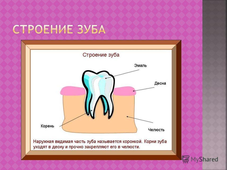 Острие зуба