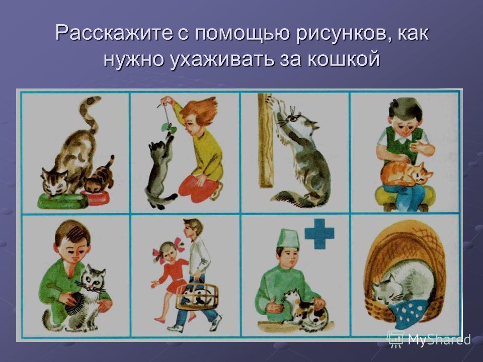 Расскажите с помощью рисунков, как нужно ухаживать за кошкой